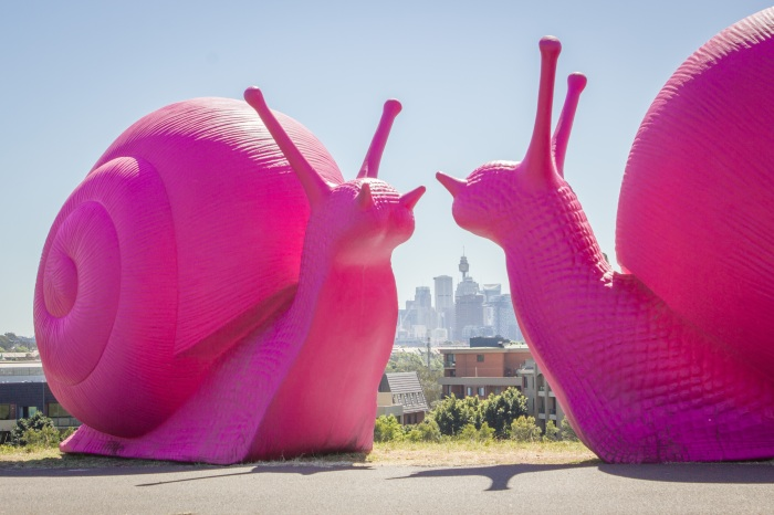 Giank Pink Snails in Sydney